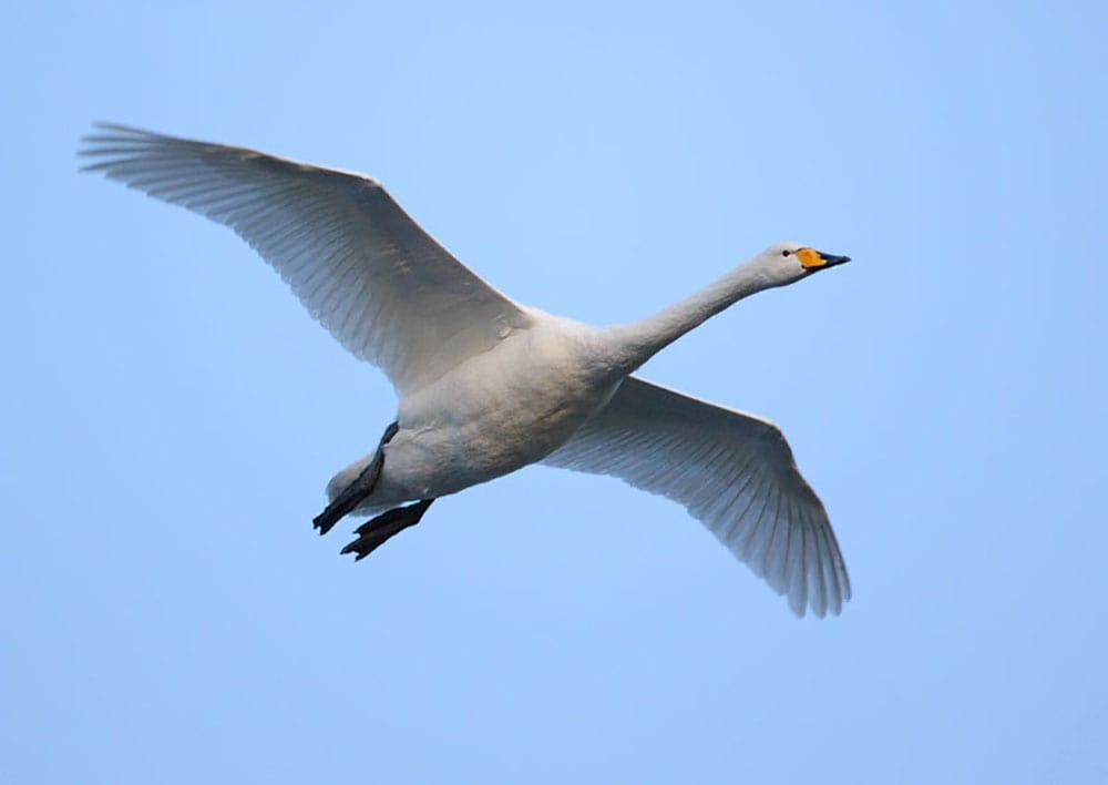 استفاده از قانون یک سوم برای عکاسی پرنده در حال پرواز