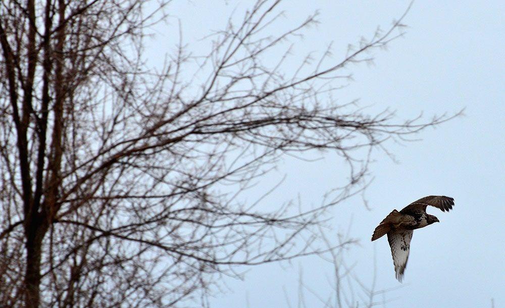 پرنده عکاسی شده در حال پرواز